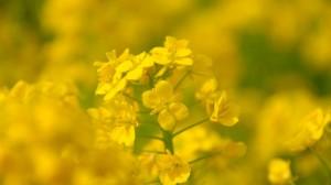 326757955 300x168 Цветотерапия: жёлтый.