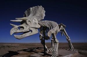 8b21d5db50 300x199 Энциклопедия динозавров 16