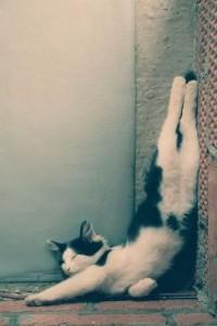 Cats relax 29 200x300 Весёлые асаны