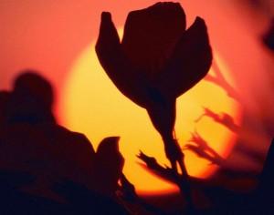 apr2 300x236 О красоте и солнце