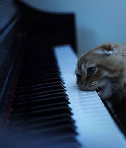 hhhpg Музыкант