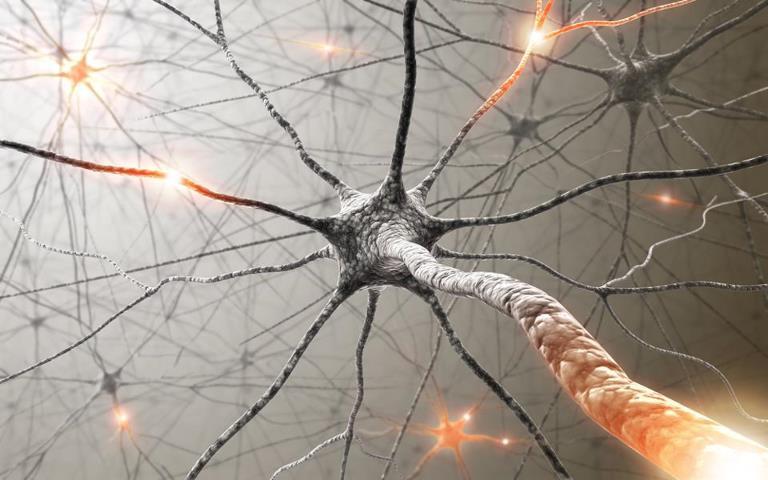 neuron Головной мозг: нейроны, нейроглии, стресс и любовь
