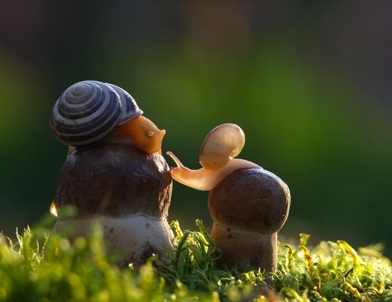 630973 Улиточная: волшебный мир головоногих
