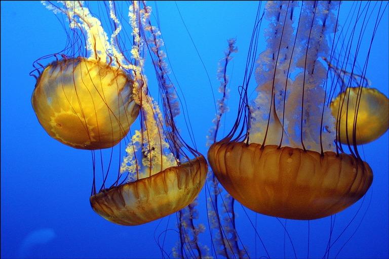 jellyfish 7 Мои любимые композиции
